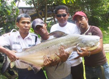 Monster-Fish-2