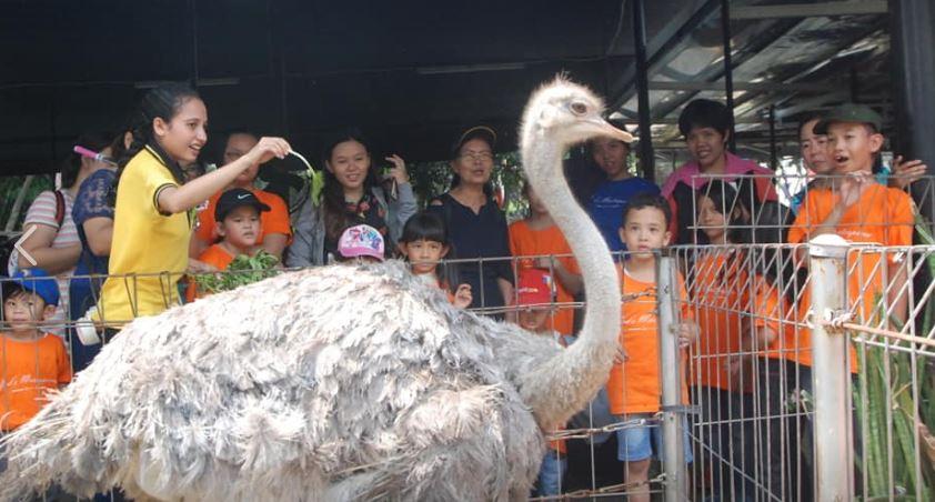 wisata edukasi burung onta