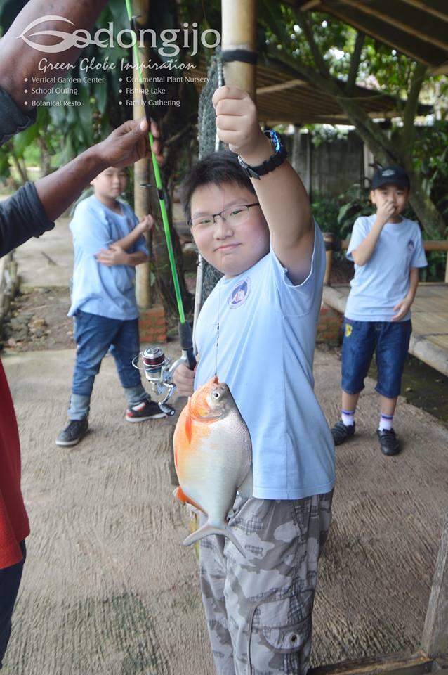 pemamcingan ikan bawal