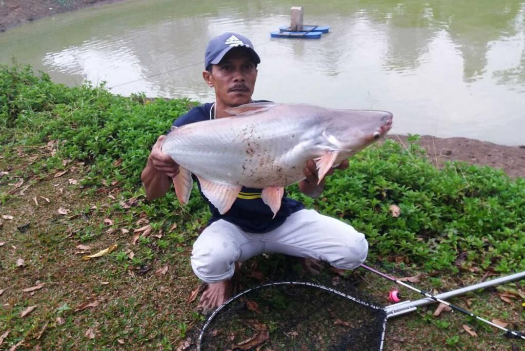 Ikan Mekong